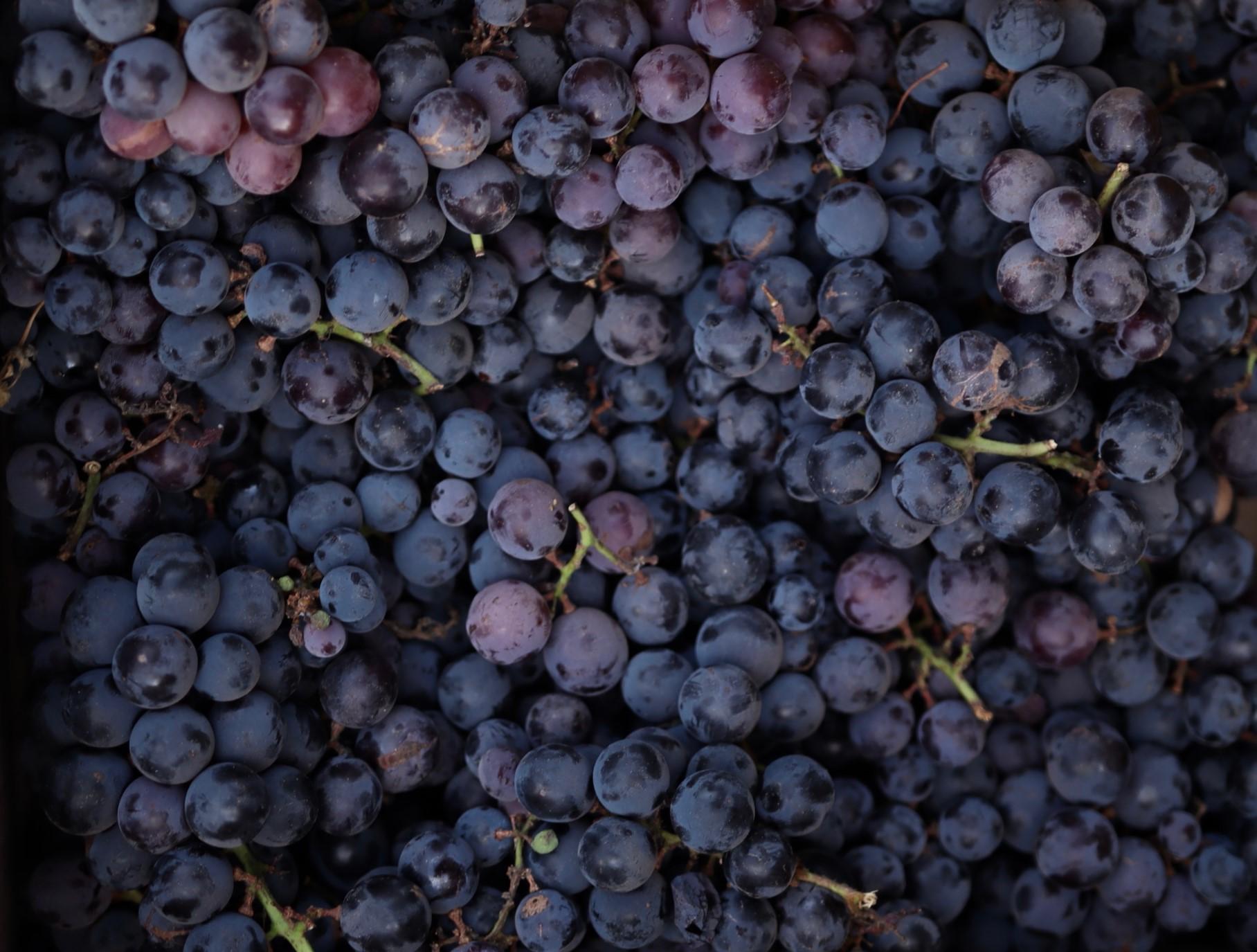 Habits: Grapes