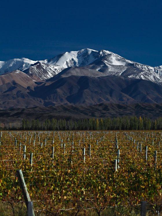 Chardonnay-Torrontés: Andes