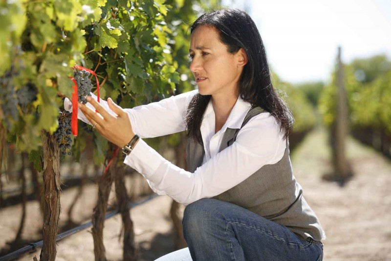 Catena: Picking Grapes