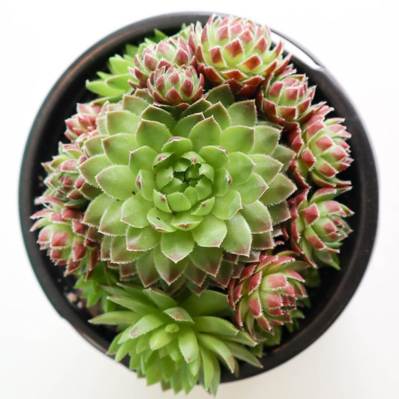 Reduce Stress with Home Office Plants and Succulents