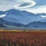Winemaker: Argentine Landscape
