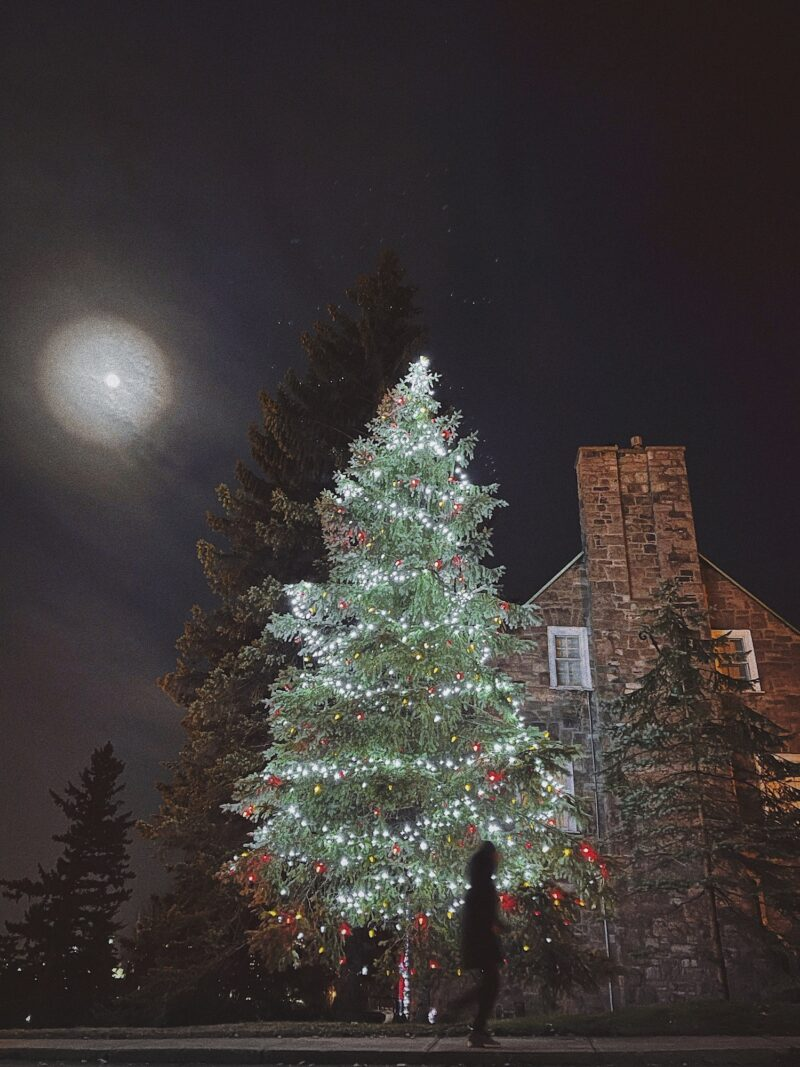 Photography Tips: Christmas Tree Outdoors