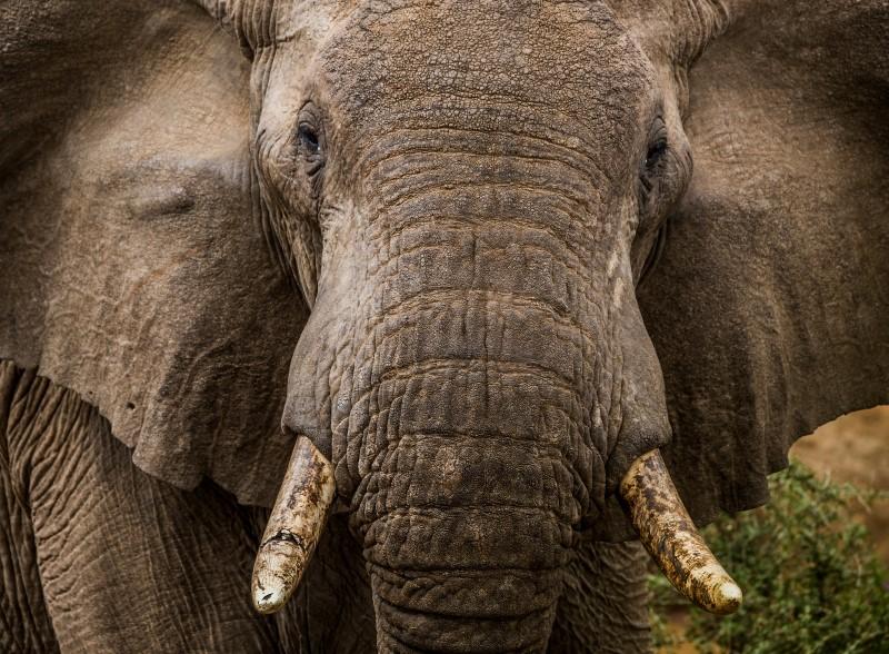 Filmmaker: Elephant Close up of Sarara