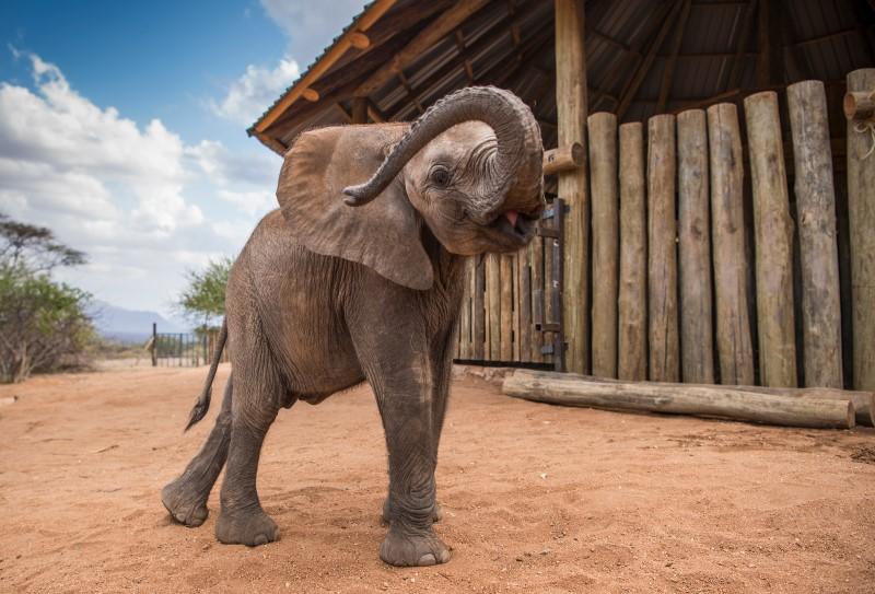 Filmmaker: Rescued Elephant at Reteti